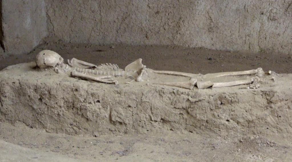 skeletnet