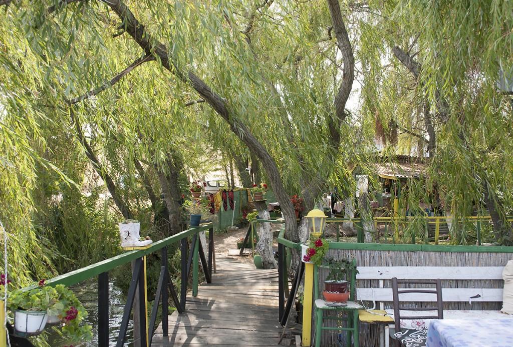 Nad Dunavom vrba i mesto za odmor i glad utoliti